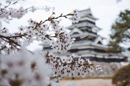 How I managed to go to work in Japan with a scholarship